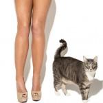 Abigail Ratchford Cat Lingerie 5