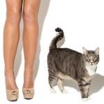 abigail-ratchford-iheartgirls-cat-lingerie-04